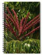 Schefflera Flower Spiral Notebook