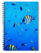 School Spiral Notebook