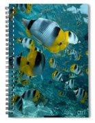 School Of Butterflyfish Spiral Notebook