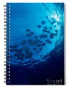 Schooling Cownose Rays Spiral Notebook