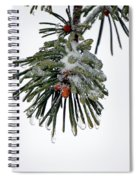 Scots Pine And Ice Spiral Notebook