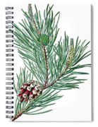 Scots Pine, Pinus Silvestris Spiral Notebook