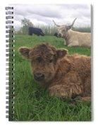 Scottish Highland Calf Spiral Notebook
