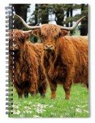 Scottish Highland Cows Spiral Notebook