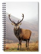 Scottish Red Deer Stag - Glencoe Spiral Notebook
