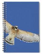 Screaming Hawk Spiral Notebook