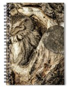 Screech Owl In Cavity Nest Spiral Notebook
