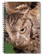 Screech Owl In Flight Spiral Notebook