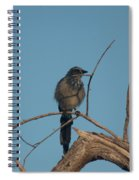Scrub Jay Private Eye Spiral Notebook
