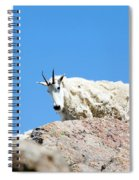 Scruffy Mountain Goat On The Mount Massive Summit Spiral Notebook