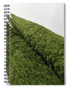 Sculpturesque Greenery - Three Cypress Trees Chiseled Against The Sky Spiral Notebook