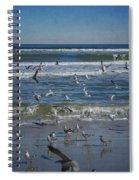 Sea Birds Feeding On Florida Coast Dsc00473_16 Spiral Notebook