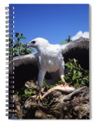 Sea Eagle Spiral Notebook
