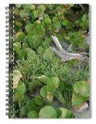 Sea Grape Dune Spiral Notebook