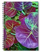 Sea Grape  Spiral Notebook