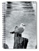 Sea Gull Black And White Spiral Notebook