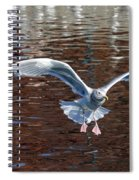 Sea Gull Landing Spiral Notebook