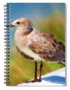 Sea Gull Of Boca Grande Spiral Notebook
