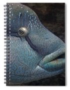 Sea Life 19 Spiral Notebook