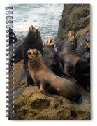 Sea Lion Chorus Spiral Notebook