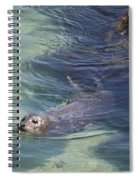 Sea Lion In Clear Blue Waters Spiral Notebook