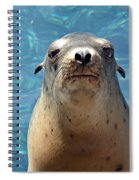 Sea Lion Or Seal Spiral Notebook