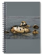 Sea Lions And Birds Spiral Notebook