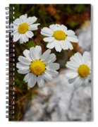 Sea Mayweed Spiral Notebook