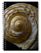 Sea Shell Beauty Spiral Notebook