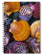 Sea Shells And Sea Glass Spiral Notebook