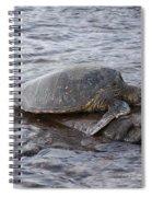 Sea Turtle On Rock Spiral Notebook