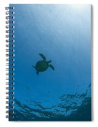 Sea Turtle Silhouette Spiral Notebook