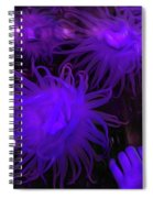 Sea Urchin 8 Spiral Notebook