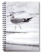 Seabird  Spiral Notebook