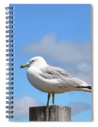 Seagull Beach Art - Sitting Pretty - Sharon Cummings Spiral Notebook
