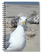 Seagull Bird Art Prints Coastal Beach Driftwood Spiral Notebook