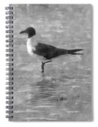 Seagull Black And White Spiral Notebook