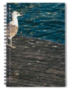Seagull On The Pier Spiral Notebook