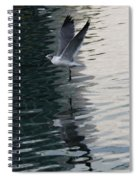 Seagull Reflection Over Blue Bay Spiral Notebook