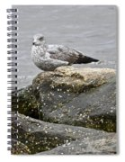 Seagull Sitting On Jetty Spiral Notebook