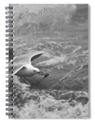 Seagull With Bread Spiral Notebook