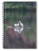 Seagulls At Lake Spiral Notebook