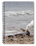 Seagulls Catch Of The Day Spiral Notebook