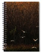 Seagulls In Flight Spiral Notebook