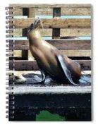 Seal Cheerleader Spiral Notebook