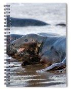 Seals Spiral Notebook