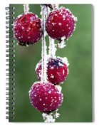 Seasonal Colors Spiral Notebook