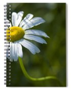 Searching For Sunlight Spiral Notebook