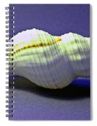 Seashell Fusinus Irregularis Spiral Notebook