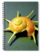 Seashell Guildfordia Yoca Spiral Notebook
